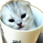 TomCuP