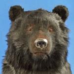 fマン.(北の熊)