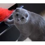 イタズラを目撃された猫