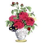 緋薔薇製薬