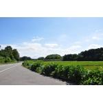 日本の交通を研究する会
