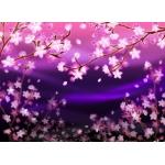 夜桜ちゃん㌨