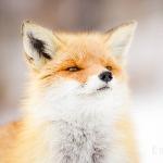 御狐 舞姫