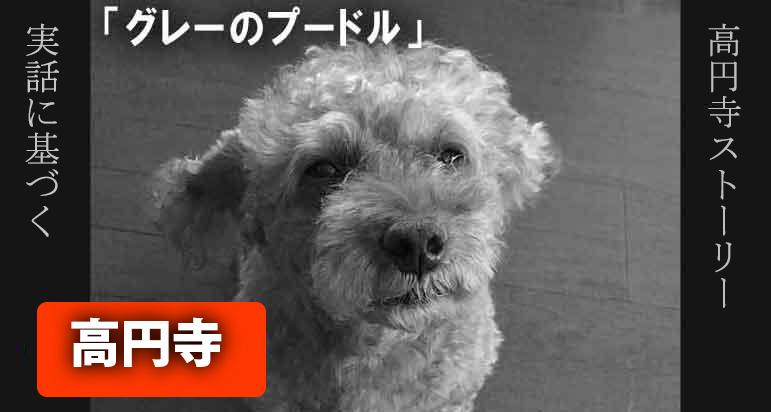 8分完結 本当にあった悲しい涙の犬の話です。