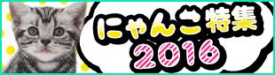 にゃんこ特集2016