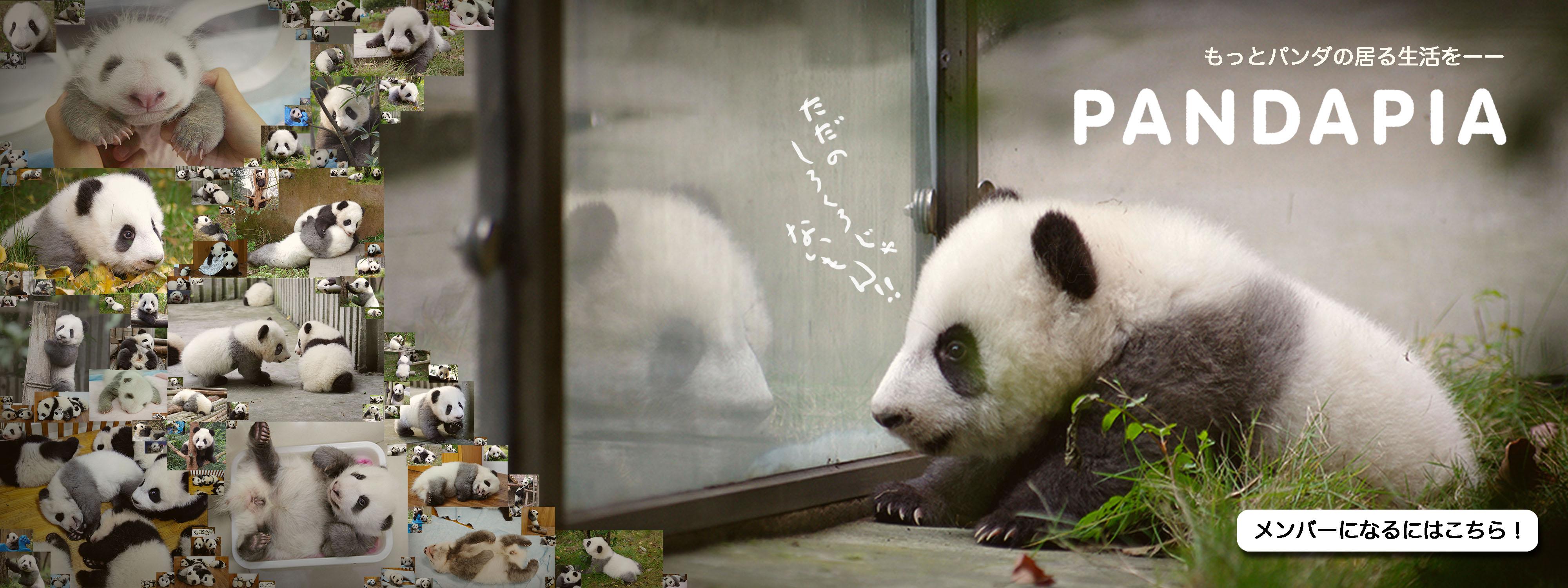 抱き にこにこ 枕 の パンダ