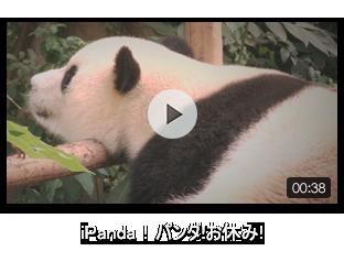 iPanda!パンダ!お休み!